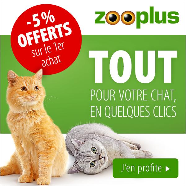 cat600zooplus.jpg